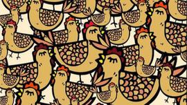 Tavukların arasındaki eldiveni görebiliyor musunuz?