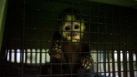 Kötü muameleye maruz kalan hayvanlar kurtarılıyor