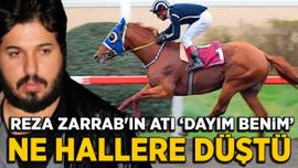 Reza Zarrab'ın atı 'Dayım benim' ne hallere düştü