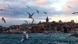 İstanbul'da göçmen kuşlarda virüs alarmı!
