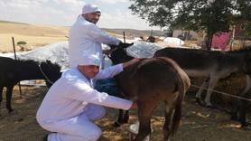 Mardin'in ödüllü eşek sütü sabunu 27 ülkeye ihraç ediliyor