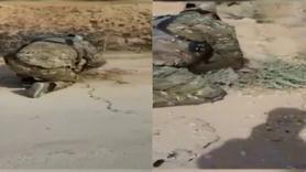 Resulayn ve Tel Abyad'da mayın temizleme çalışmaları yapıldı
