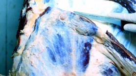 'Fransa'da 3 bin ton veremli et satışa çıkarıldı' iddiası