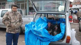 Tokat'ta otomobilde hindi satışı