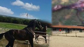 Milyonluk yarış atlarını kurtlar yedi