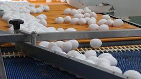 Kriz o ülkeye de sıçradı... Milyonlarca yumurta imha edildi