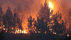 Domaniç'te çıkan orman yangını Bilecik sınırına ulaştı