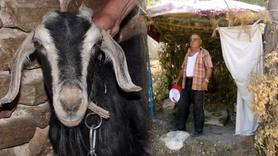 Keçiye tecavüz etti! Sahibine yakalandı
