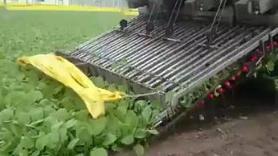 Turp hasat makinesi