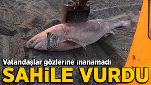 İzmir'de sahile dev köpekbalığı ölüsü vurdu