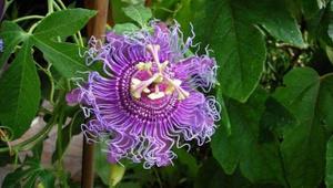 Bitki ve meyvelerin bilinmeyen yararları
