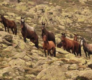 Yılkı atları Kumalar Dağı'nda ortaya çıktı