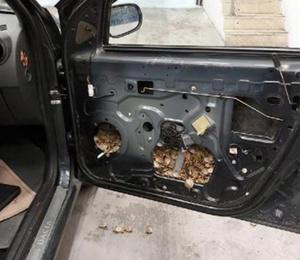 Aracın kapı döşemesinden 5 bin 450 su kaplumbağası çıktı!