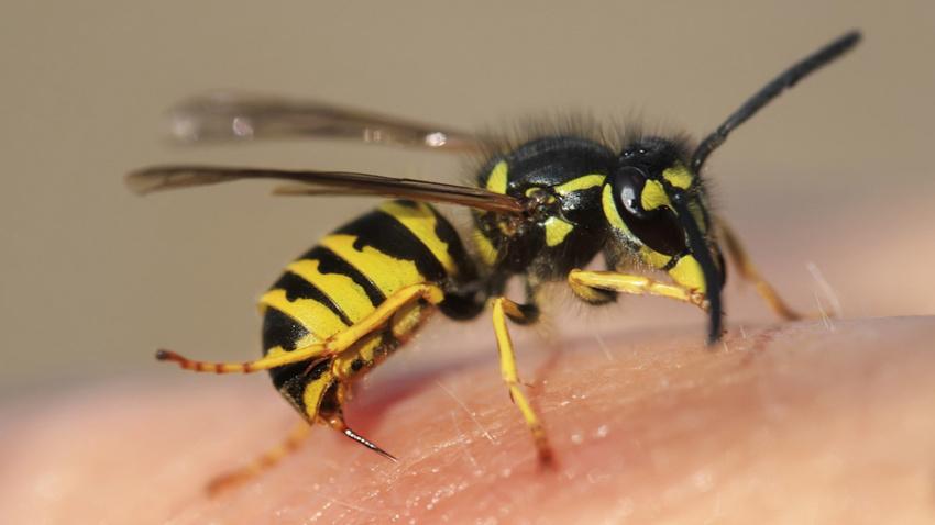 Eşek arısının soktuğu yaşlı kadın hayatını kaybetti