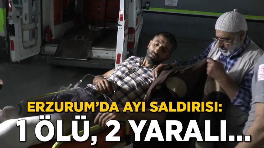 Erzurum'da ayı saldırısı: 1 ölü, 2 yaralı...