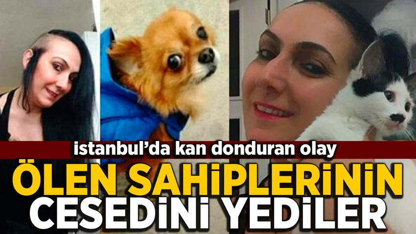 İstanbul'da korkunç olay! Ölen sahiplerinin cesedini yediler