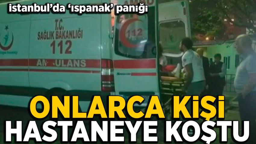 İstanbul'da ıspanak kabusu! Sayı artıyor
