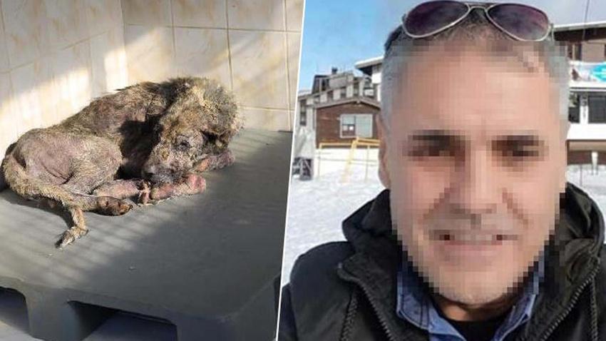 Sokak hayvanlarını öldüreceğini söyleyen belediye çalışanı hakkında flaş gelişme!