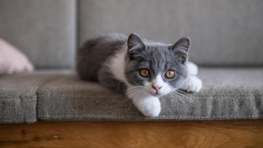 Kedinizin sizden nefret ettiğinin göstergeleri