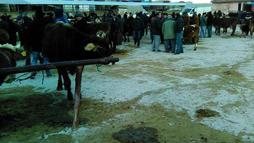 Tokat'ta şap nedeniyle hayvan pazarları kapatıldı