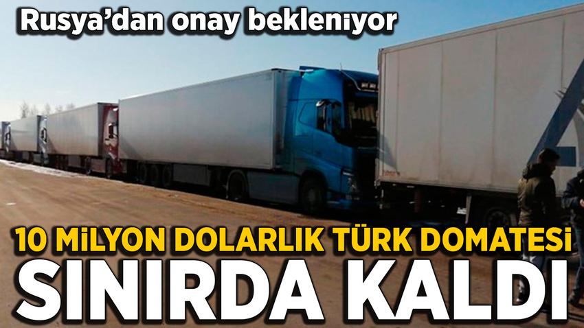 10 milyon dolarlık Türk domatesi Rusya sınırında bekletiliyor