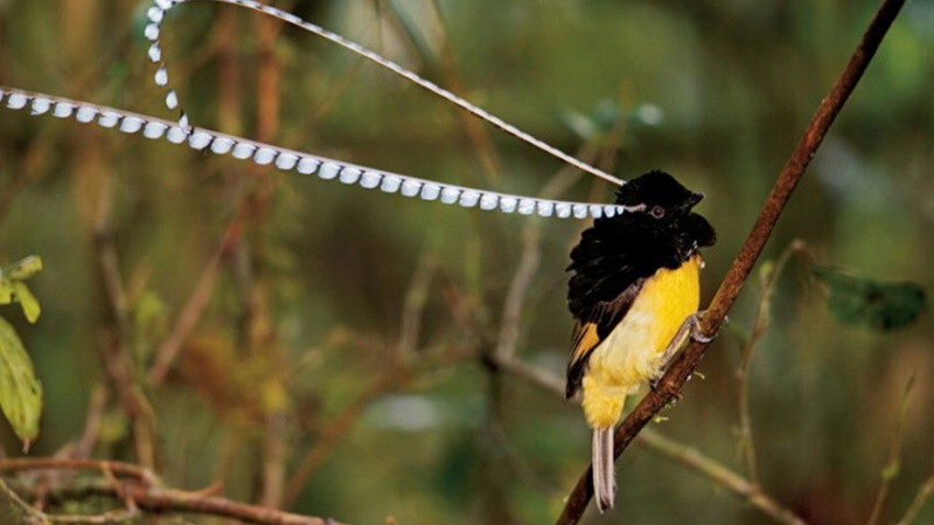 30 kuş türünün muhteşem görüntüsü
