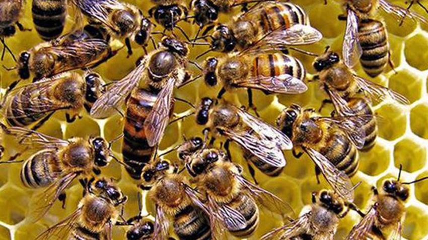 Arı saldırısına uğrayan arıcı hayatını kaybetti