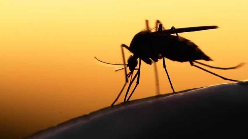 """Sağlık Bakanlığı'ndan """"Batı Nil Virüsü"""" açıklaması"""
