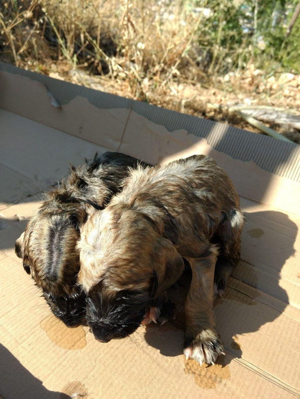 Yavru köpekleri çuvala koyup kuyuya attılar - Sayfa 2