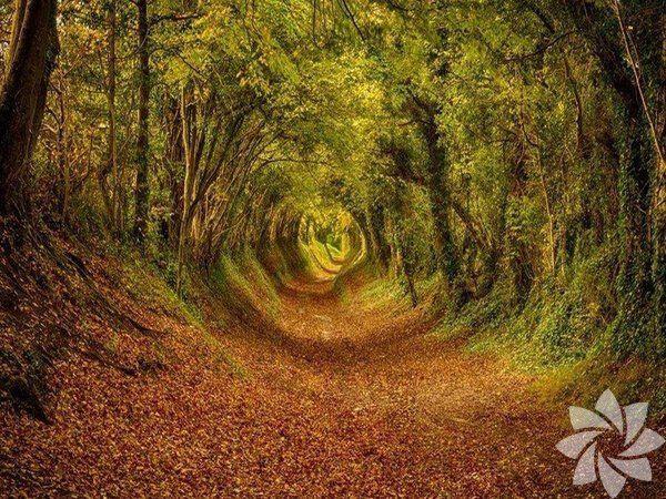 Dünyanın en güzel 20 ağaç tüneli - Sayfa 1