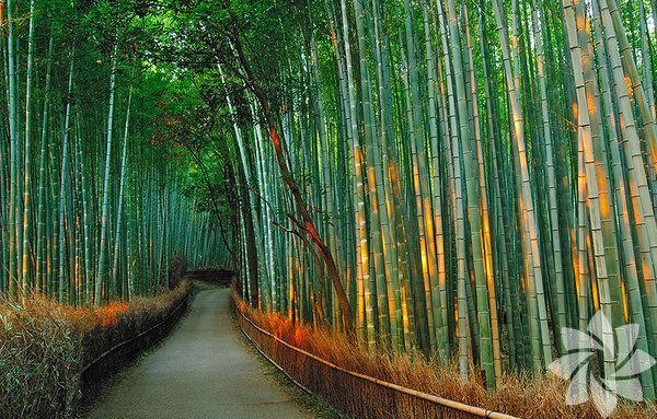 Dünyanın en güzel 20 ağaç tüneli - Sayfa 2