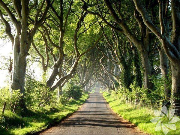 Dünyanın en güzel 20 ağaç tüneli - Sayfa 3