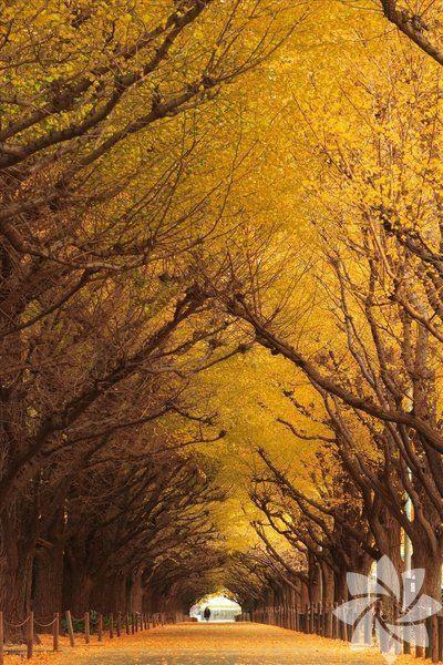 Dünyanın en güzel 20 ağaç tüneli - Sayfa 4