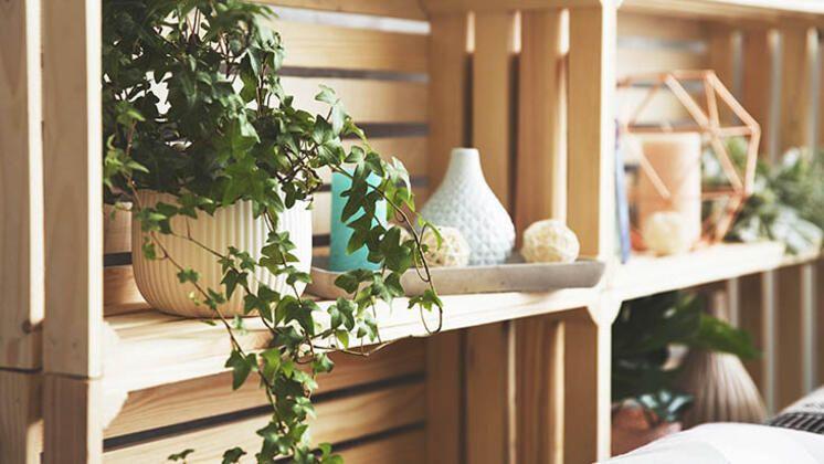 Evinize canlılılık katacak en iyi 9 asma bitki - Sayfa 1