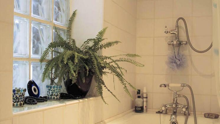 Evinize canlılılık katacak en iyi 9 asma bitki - Sayfa 2