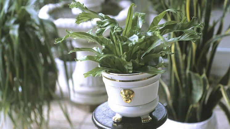 Evinize canlılılık katacak en iyi 9 asma bitki - Sayfa 3