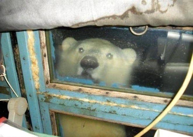 Neredeyse her evde var! Tuzaklı pencerelerin niye yapıldığını duyan şaşıp kalıyor! - Sayfa 4