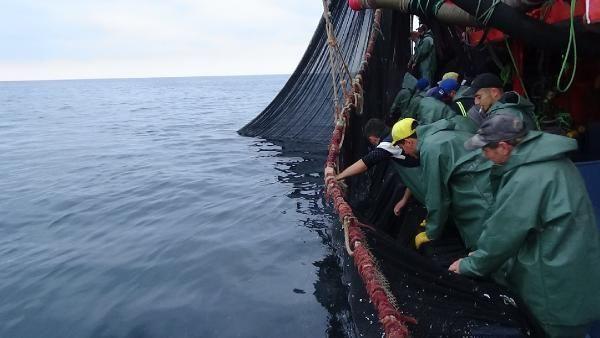 Karadeniz'de balık bolluğu! Vira Bismillah - Sayfa 4