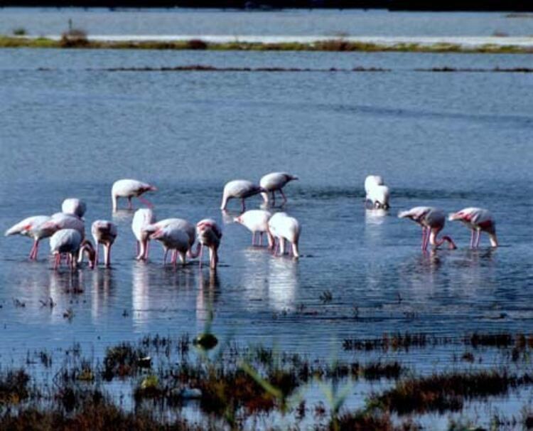 Flamingolar yoğun ilgi görüyor - Sayfa 2