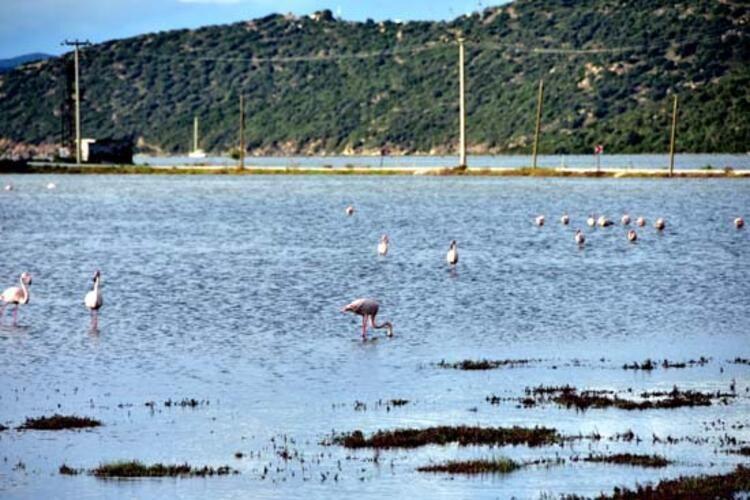 Flamingolar yoğun ilgi görüyor - Sayfa 4