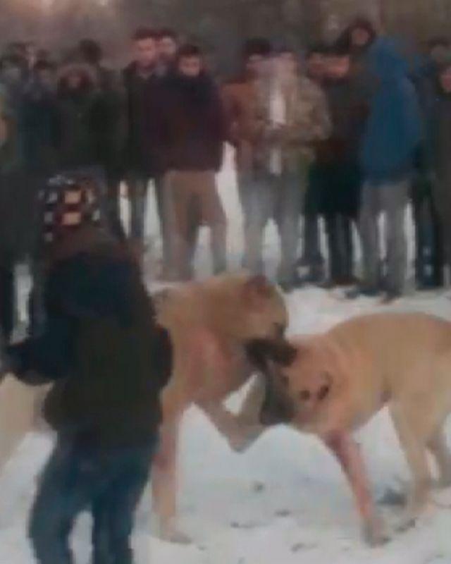 Konya'da ormanda köpek dövüştüren 4 kişiye gözaltı - Sayfa 1