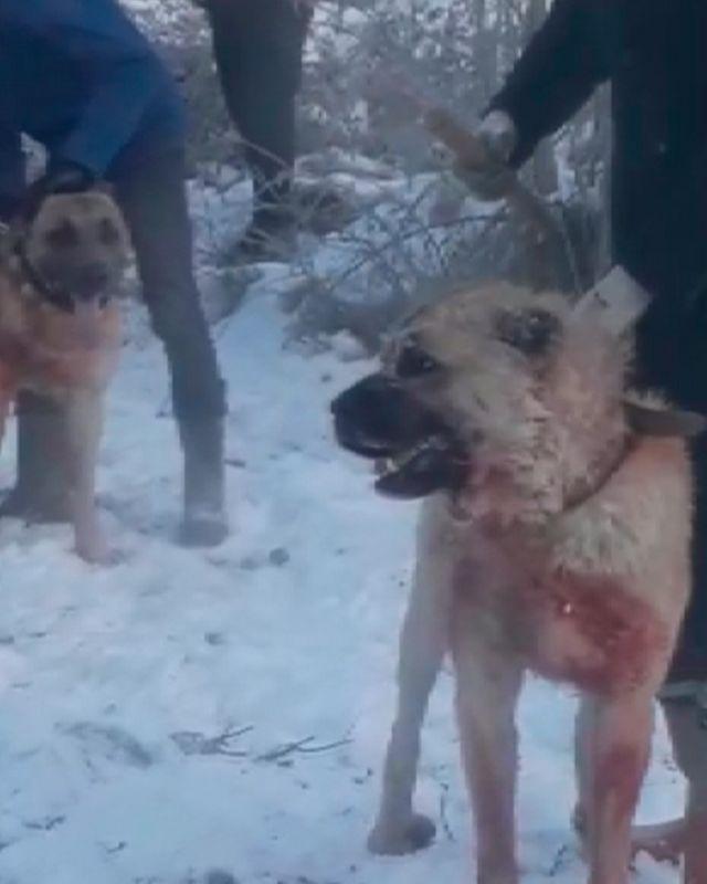 Konya'da ormanda köpek dövüştüren 4 kişiye gözaltı - Sayfa 3