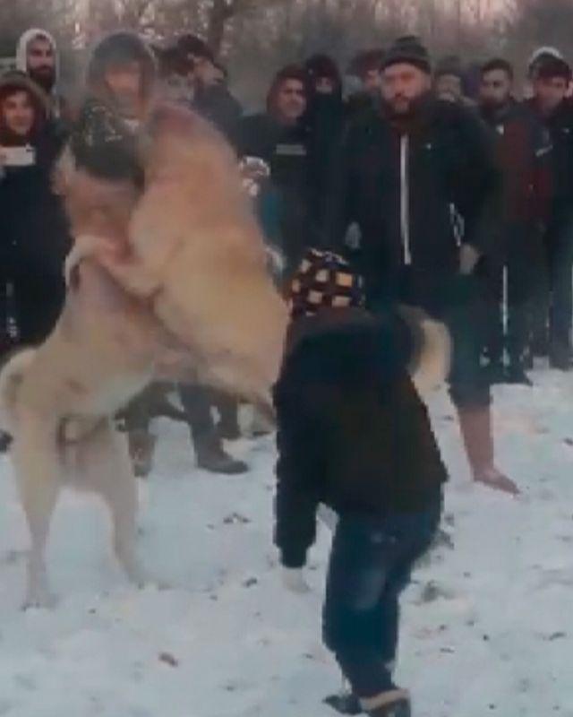 Konya'da ormanda köpek dövüştüren 4 kişiye gözaltı - Sayfa 4