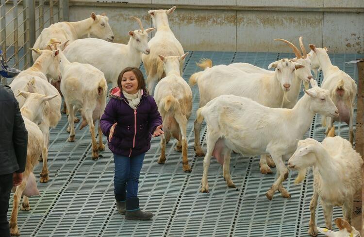 Kızı süt içsin diye kurduğu çiftlikle zincir marketlere girdi - Sayfa 1