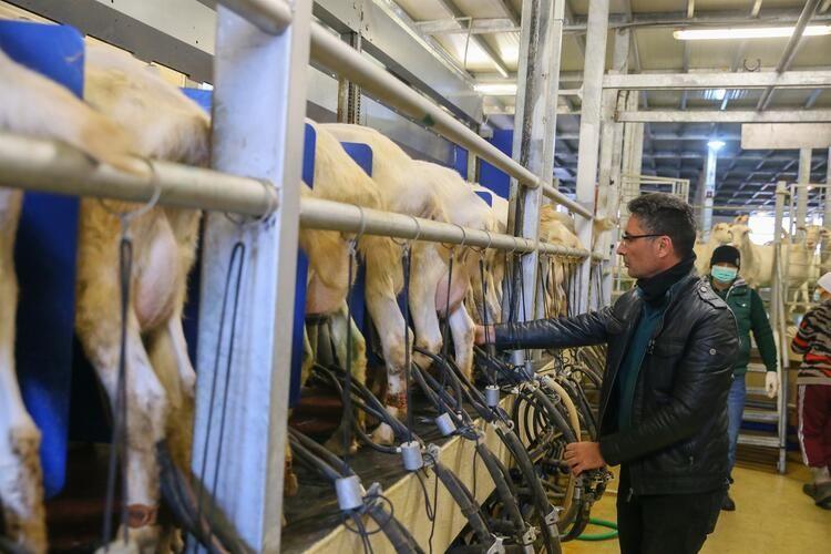 Kızı süt içsin diye kurduğu çiftlikle zincir marketlere girdi - Sayfa 4