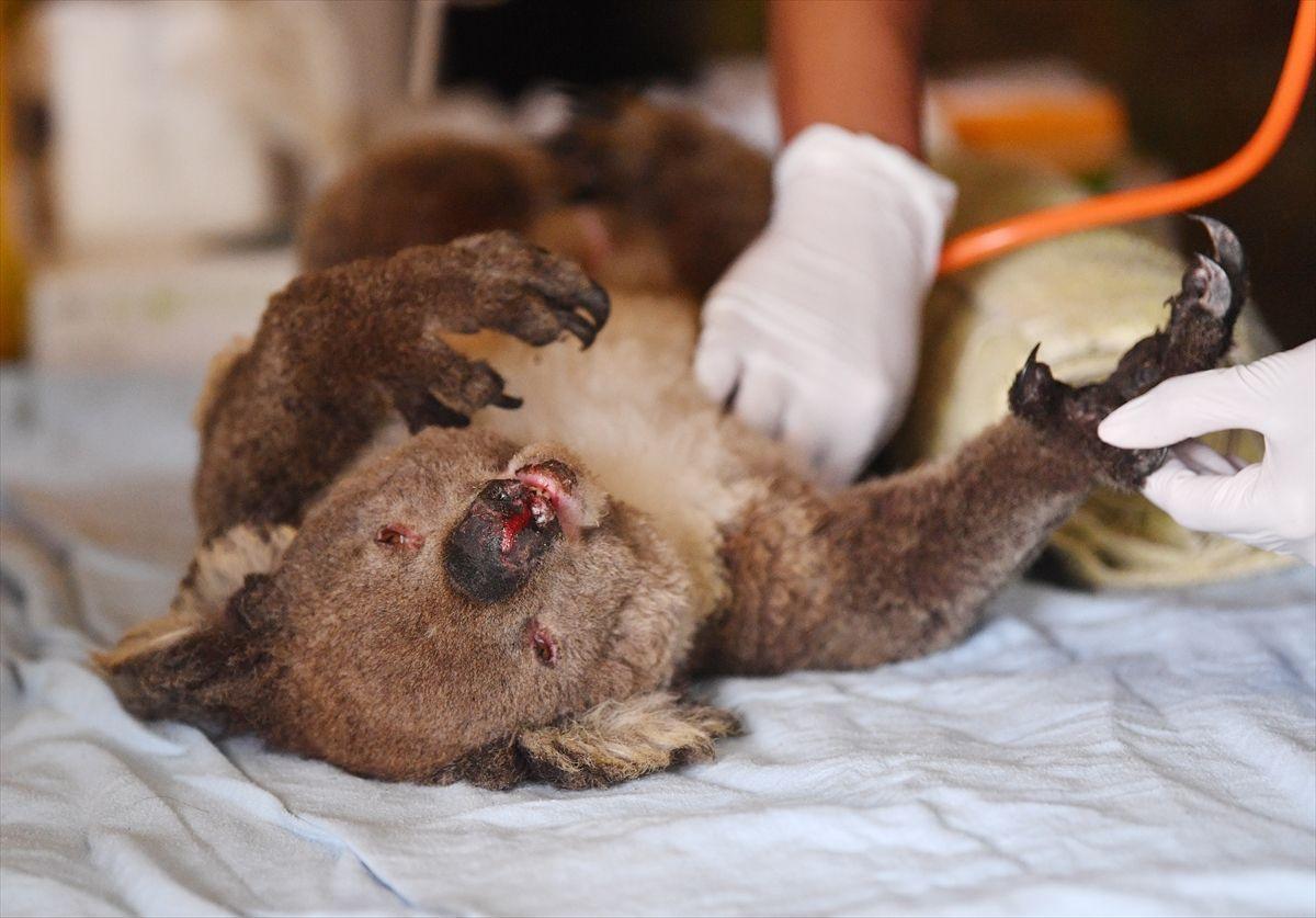 Avustralya'da korkunç felaket! Yetkililer çağrı yaptı - Sayfa 1
