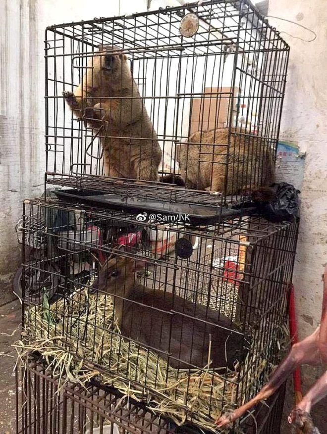 Koala, yılan, kedi ne bulsalar yiyorlar! İşte katil hastalık koronavirüsün yayıldığı pazardan kareler - Sayfa 3