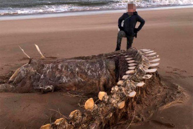 İskoçya'da Ciara fırtınasından sonra karaya vuran devasa iskelet görenleri hayretler içinde bıraktı - Sayfa 1