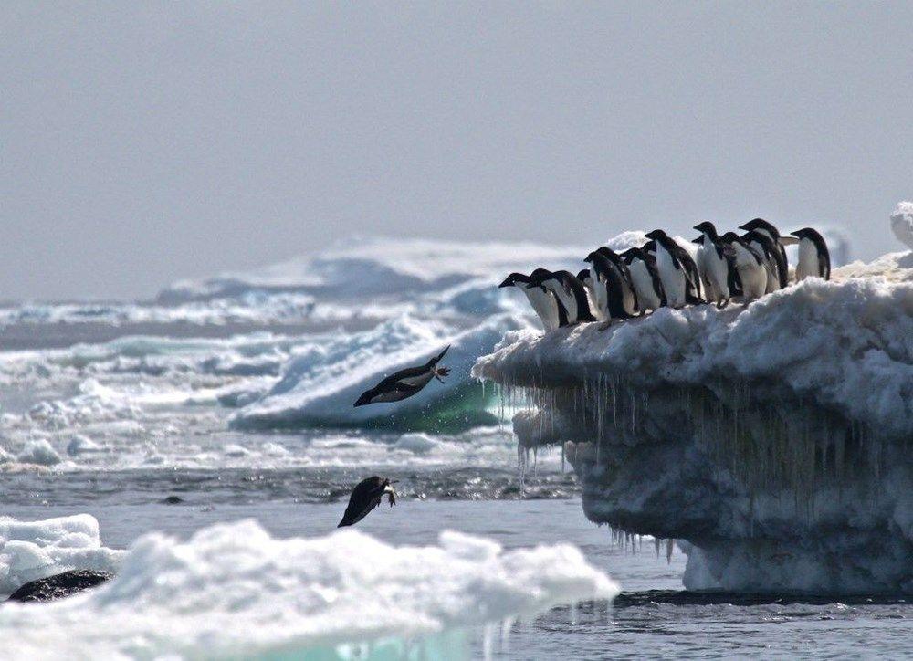 Antarktika şimdiye kadarki en yüksek sıcaklığa ulaştı: 20.75 derece - Sayfa 1