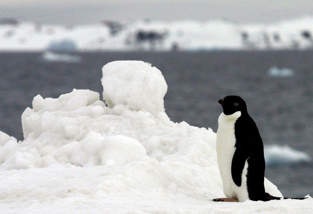 Antarktika şimdiye kadarki en yüksek sıcaklığa ulaştı: 20.75 derece - Sayfa 3